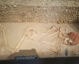 Museo de Antropología Prehistórica